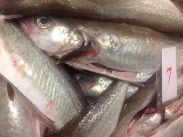 Whole Whiting