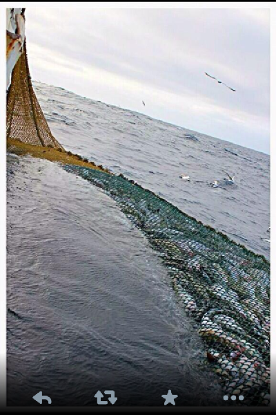 Net Fishing